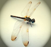Portrait of a Dragonfly by michelleduerden