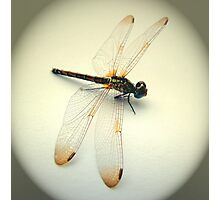 Portrait of a Dragonfly Photographic Print