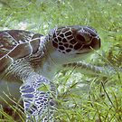 Green Turtle by TaiHaku