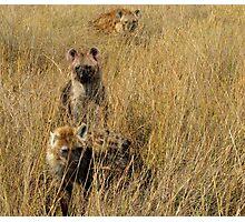 Hyena Clan Photographic Print
