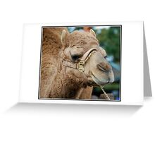 Looking for the Wise Men: Greeting Card
