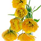 Yellow Tulips - Digital Art by Ann Garrett