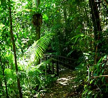 Rainforest Walk by JuliaWright