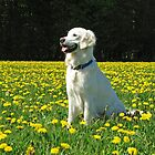 Ditte in a field of dandelion by Trine