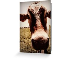 Curious Cow Greeting Card