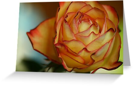 And don`t forget to give my love to Rose ... by wise