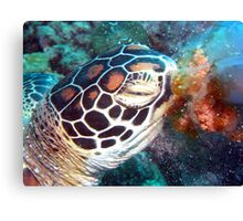 Turtle Jelly Canvas Print