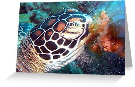 Turtle Jelly by TaiHaku