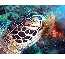 Turtle Jelly Photographic Print
