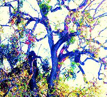 Gnarly Old Tree by Polly Peacock