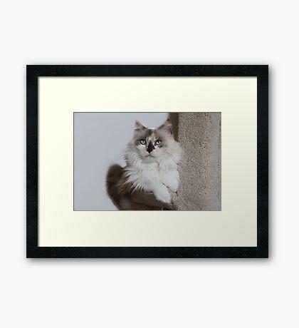 Mia, my girl! Framed Print