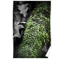 Mossy Log on a Frosty Morning Poster