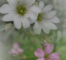 Light Pink and Bright White by J L Kempster
