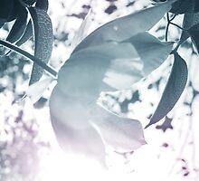 Glare by Joakim