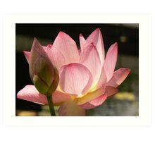 Pink Lotus with bud Art Print
