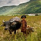 Buffalo boy by Geraldine Lefoe