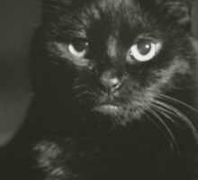 Portrait of black cat square black and white analogue medium format film Hasselblad  photograph Sticker