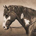 Native American War Horse in Sepia by csforest