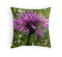 Greater Knapweed Throw Pillow