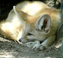 Resting Fox by the Shade by litosing