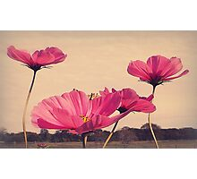 I Dreamt Last Night...of Flowers Photographic Print