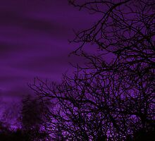 Aubergine Twilight by LavenderMoon