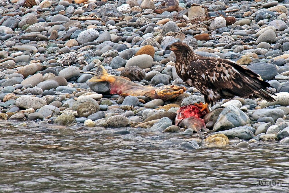 Breakfast on the Skigit River by JWallace