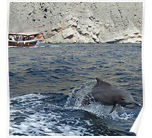 Dolphin, Khor Sham Poster