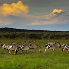 Zebras at Sunset by Nickolay Stanev