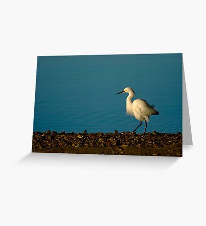 Snowy Egret Strut Greeting Card