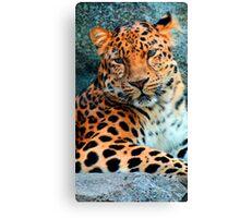 Amur Leopard ~ A Solemn Portrait Canvas Print
