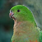 King Parrot (Immature)  by Bev Pascoe
