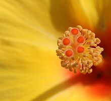 Natures Complex Design by reflector