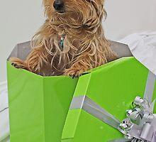 What's my present? by Brigitta Adam
