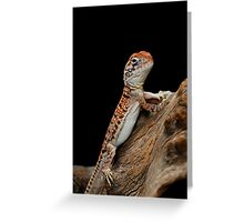 Central Netted Dragon [Ctenophorus nuchalis] Greeting Card