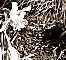Spring - Around the Corner by Timothy Flohe