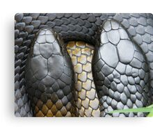 Male and Female Tiger snakes Canvas Print