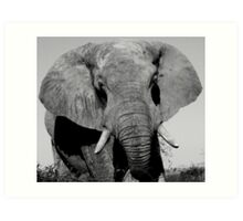 Elephant Bull Art Print