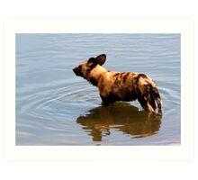 Wild Dog in water Art Print