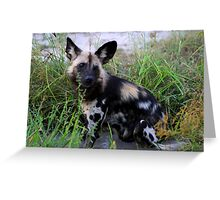 Wild Dog sitting in the water Greeting Card