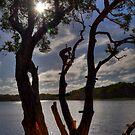 Rope Swing - Lake Ainsworth, Lennox Head, Australia. by Leigh Nelson