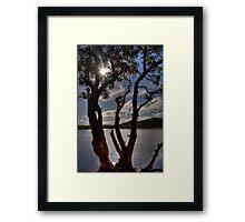 Rope Swing - Lake Ainsworth, Lennox Head, Australia. Framed Print