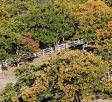 White Fence through Oak Trees - 7483 by BartElder