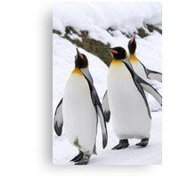 King Penguin Canvas Print
