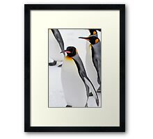 King Penguin Framed Print