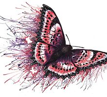 Paint the Town Lovely - Pink Butterfly with Paint Splatters by DanielleTrudeau
