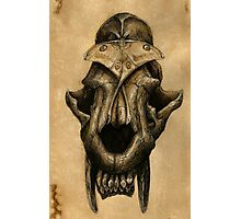 Ancient Smiles - Sabre Toothed Cat Skull with Comet Moth Photographic Print