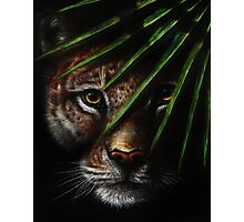 Shadows - Big Jungle Cat Hiding in the Shadows Photographic Print