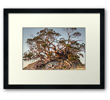 The Tree of Rock Framed Print