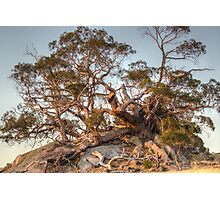 The Tree of Rock Photographic Print
